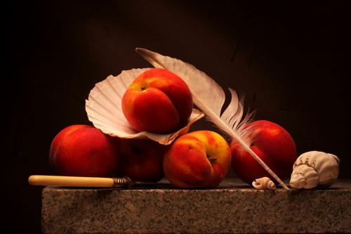 Still life with Peaches, Seashells and lost Seagull Feather