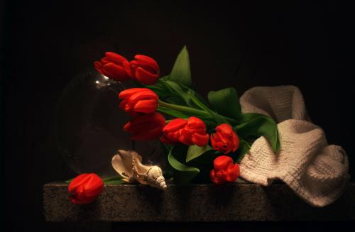 Still life with broken Seashell and Red Tulips